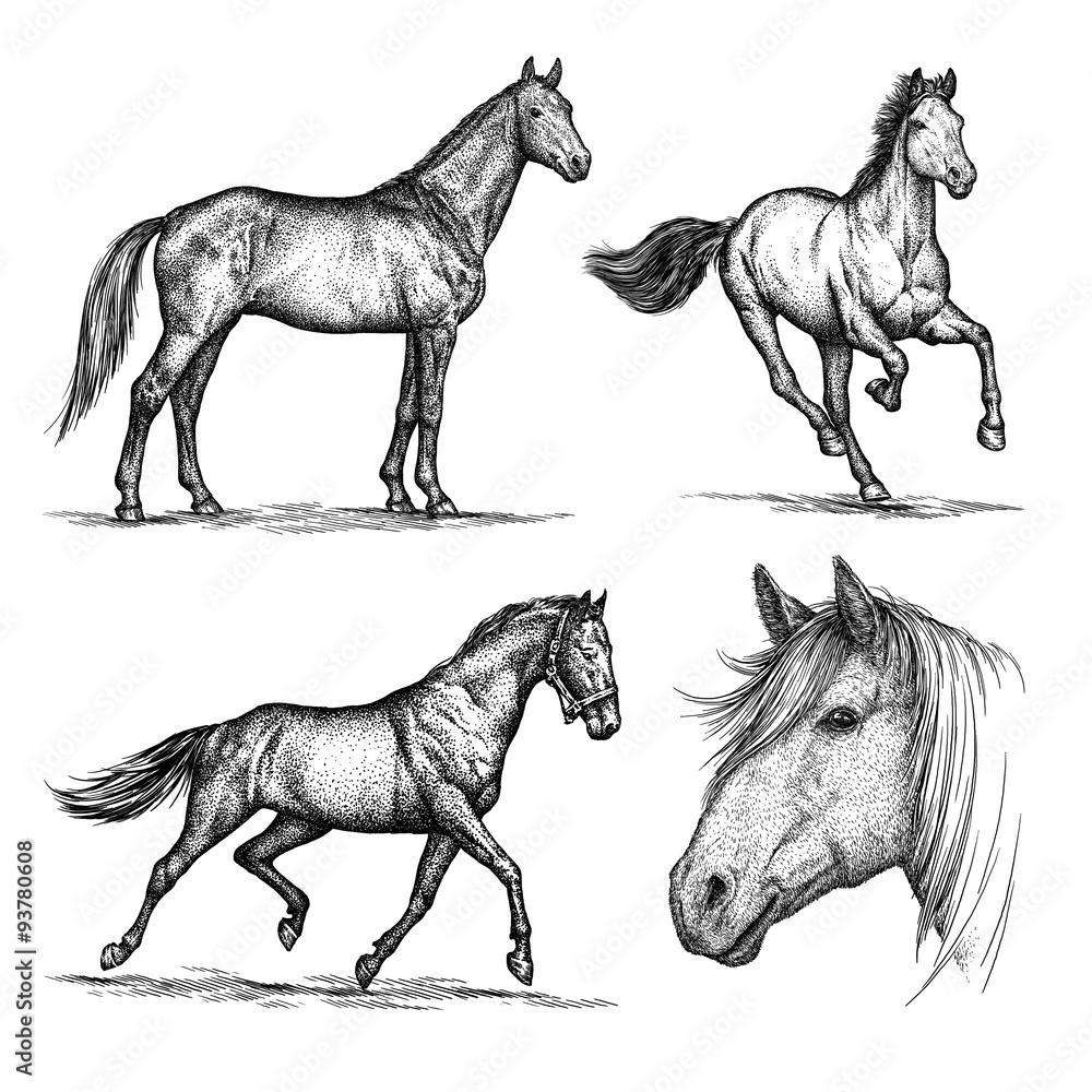 Fototapety, obrazy: engrave horse illustration