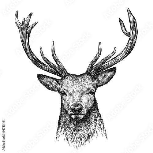 engrave deer illustration Wall mural