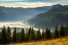 Coniferous Forest In Foggy Romanian Mountains At Sunrise