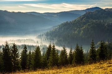 Fototapetaconiferous forest in foggy Romanian mountains at sunrise