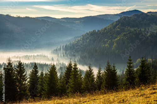 Garden Poster Forest coniferous forest in foggy Romanian mountains at sunrise