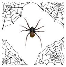 Spiderweb. Big Spider Web. Sca...