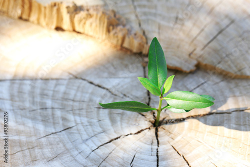 Photo  Beautiful seedling growing in the center trunk as a concept of new life