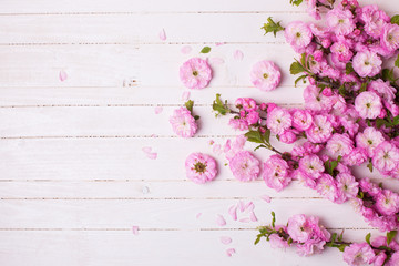 Background with bright pink flowers on white wooden planks.
