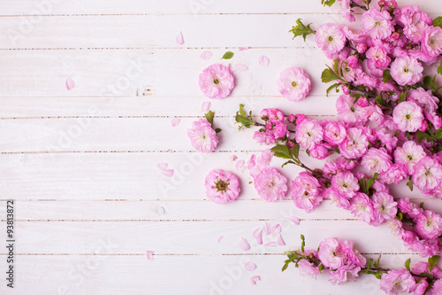 Fényképezés  Background with bright pink   flowers on white  wooden planks.