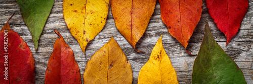 Obraz Colorful autumn leaves on wooden background - fototapety do salonu