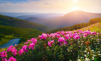 Fototapeta Krajobraz Rhododendron