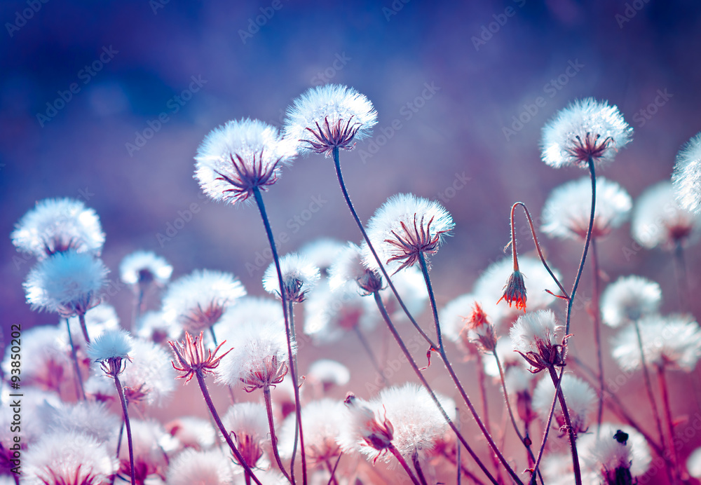 Fototapety, obrazy: Autumn meadow plants during sunset