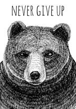Never Give Up Slogan. Bear Hand Drawn Illustration