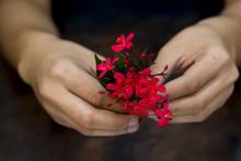 Still Life Of Hand Holding Red Flower On Dark Background
