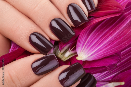 Dark red nail polish. Poster