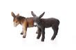 Zwei Esel auf weissem Hintergrund