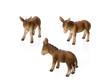 Drei Esel auf weissem Hintergrund
