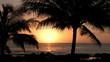 Hawaiian sunset palms Hawaii beauty M HD