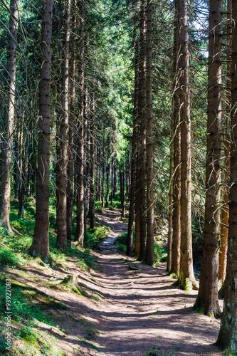 Poster de jardin Parc Naturel Nature trails in the forest