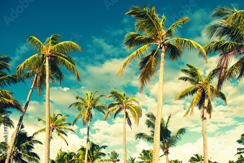 Tropical sky and palm trees Wallpaper Mural