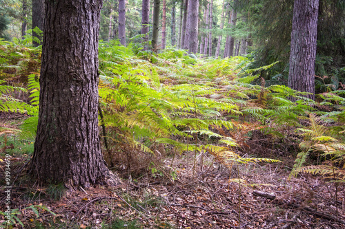 Fern and Trees in the Autumn © CeHa