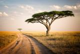 Fototapeta Sawanna - African Landscape - Tanzania