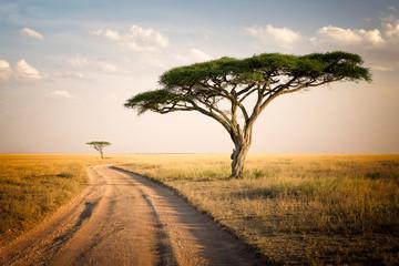 Fototapeta African Landscape - Tanzania