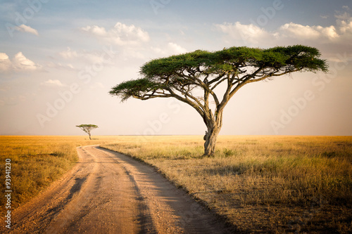 Photo  African Landscape - Tanzania
