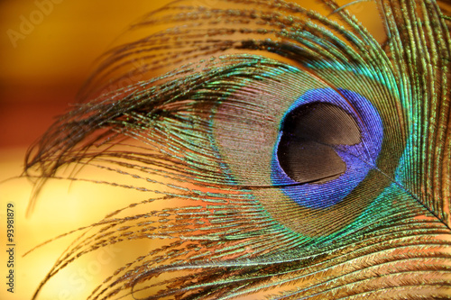Fotografie, Obraz  plume de paon