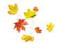 Leinwandbild Motiv Herbstlaub