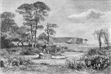 1876 Exhibition Of Painting, Gorse In Bloom, By Alexandre Sege,