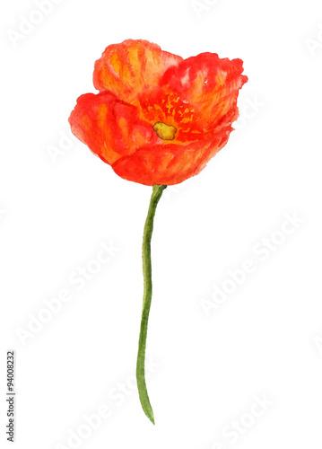 Poster Poppy Poppy flower