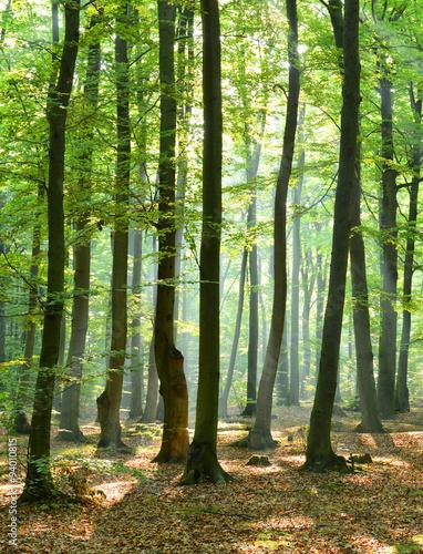 poranek-w-lesie