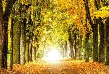 Fototapeta (Melancholische) Herbstidylle