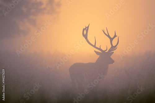 Deurstickers Hert Red Deer Stag