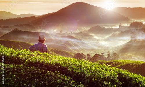 Cuadros en Lienzo Farmer at Tea Plantation in Malaysia Concept