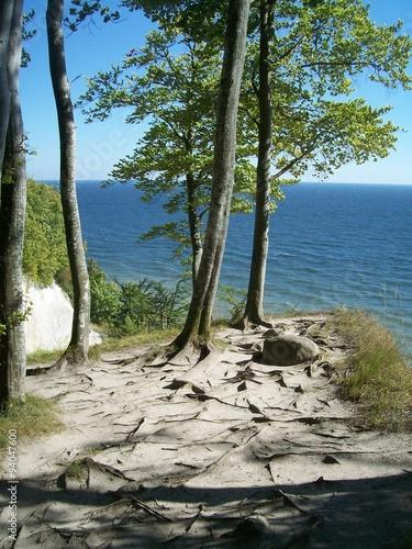 Spoed Foto op Canvas Noordzee Bäume an Klippe