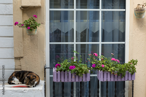 Photo  cat and flowers outside a house on Burgaz island, Istanbul, Turkey