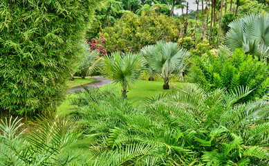 FototapetaFrance, the picturesque garden of Balata in Martinique