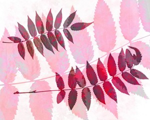 FototapetaAbstract watercolor background and rowan leaves. Mixed media