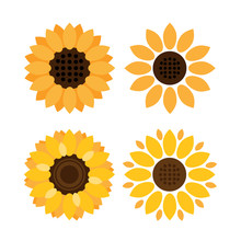 Colorful Sunflower Vector Icons On White Background