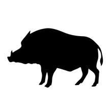 Vector Black Silhouette Of The Wild Boar Isolated On White Background