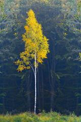 Fototapetajesień w lesie