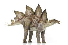 3D Model Stegosaurus Isolated ...