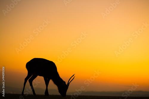 Poster Olifant 奈良の夕焼けと鹿
