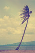 lonely palm, sea, nature, wind
