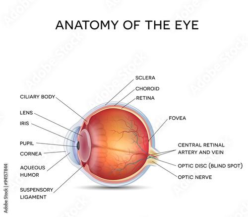 Fotografie, Obraz Normal eye