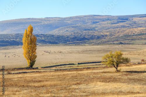 Papiers peints Cactus Paisaje de otoño en la montaña de Gredos en Madrid