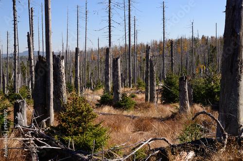 Borkenkäfer-Schaden im Bayerischen Wald