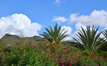 Tropical Plants In The Park,Te...