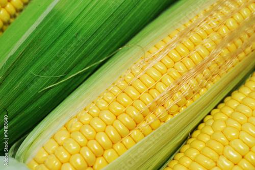 Fotografie, Obraz  fresh corn