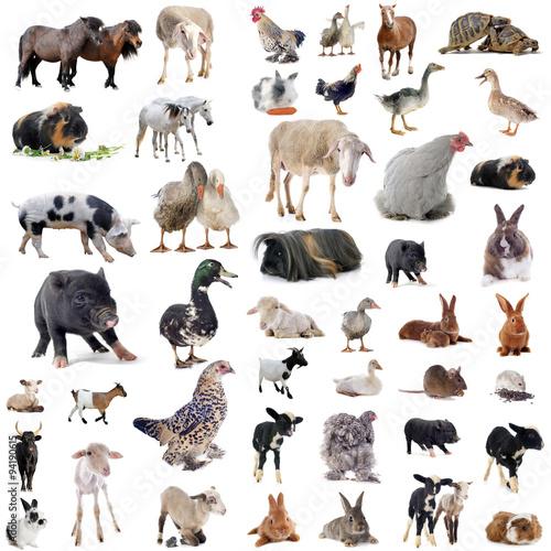 farm animals Wall mural
