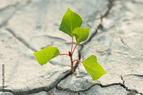 Fotografie, Obraz  young plant growing through the ground