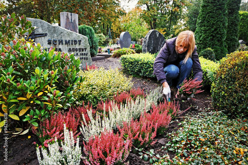 Poster Begraafplaats Planting Calluna on a Grave in Autumn, Germany